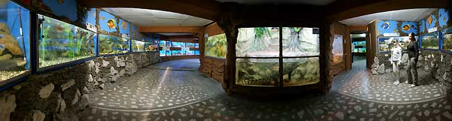 Алушта аквариум